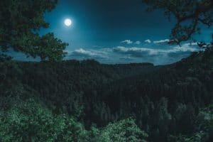 Was ist Mondholz?