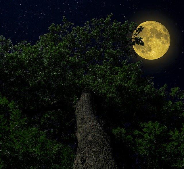 Von Schlaflosigkeit und Mondholz: Mondmythen